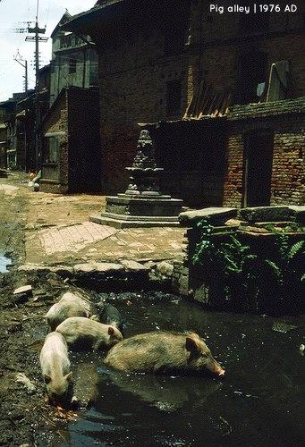 Pig Alley near Bhimsenthan and Kathmandu Durbar Square 1976AD
